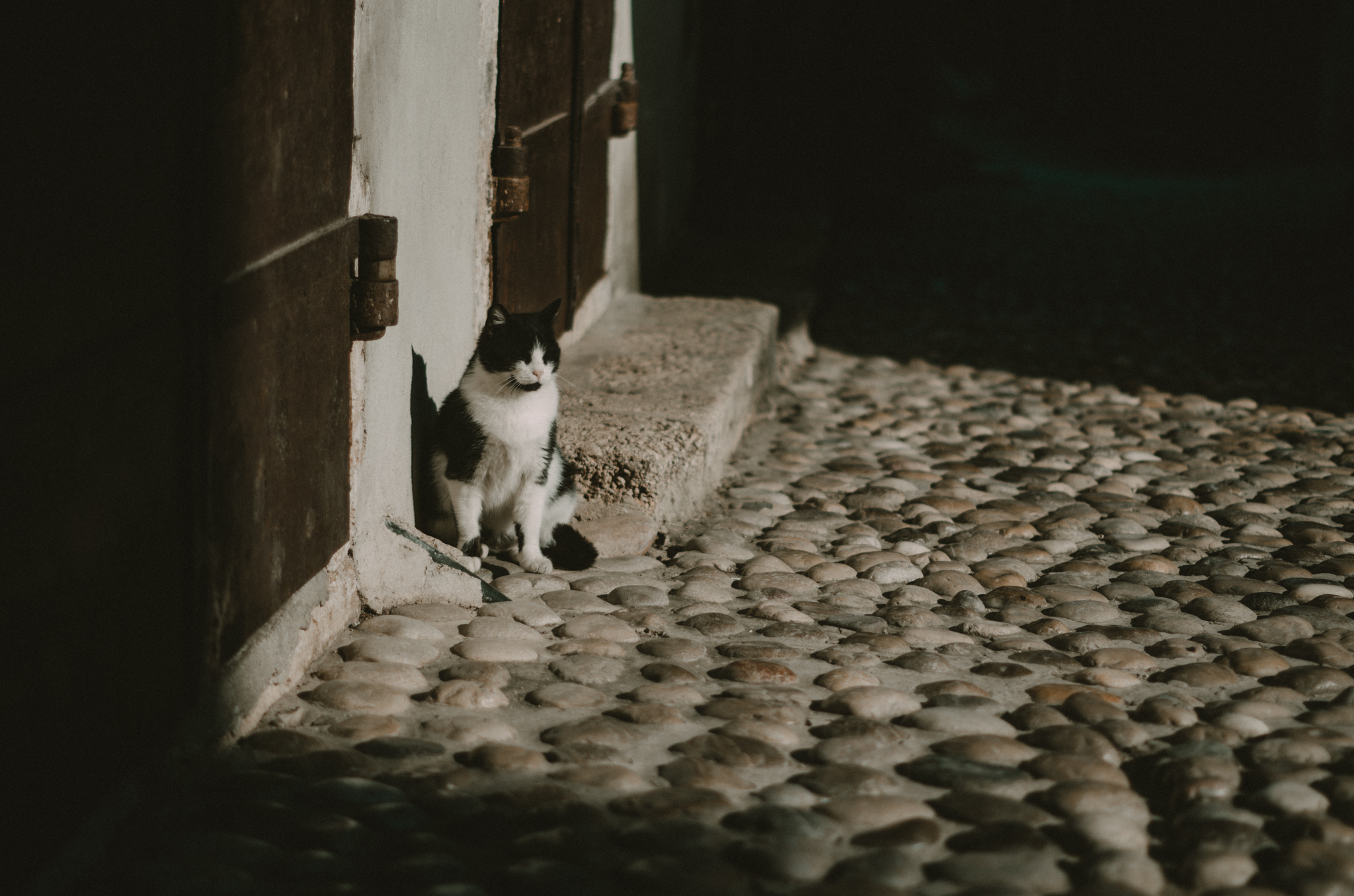 koty-w-mostarze-bosnia-hercegowina