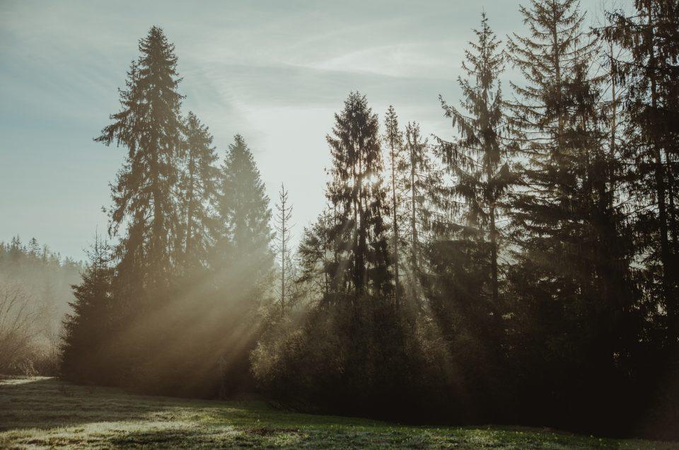 Co warto wiedzieć o drzewach