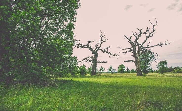 łęgi rogalińskie, Rogalin Landscape Park, pałac w rogalinie, lech czech i rus